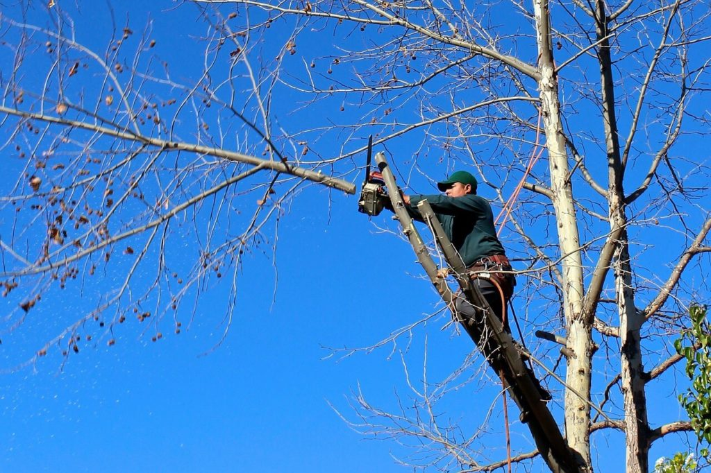 Contact Us-Sun City FL Tree Trimming and Stump Grinding Services-We Offer Tree Trimming Services, Tree Removal, Tree Pruning, Tree Cutting, Residential and Commercial Tree Trimming Services, Storm Damage, Emergency Tree Removal, Land Clearing, Tree Companies, Tree Care Service, Stump Grinding, and we're the Best Tree Trimming Company Near You Guaranteed!