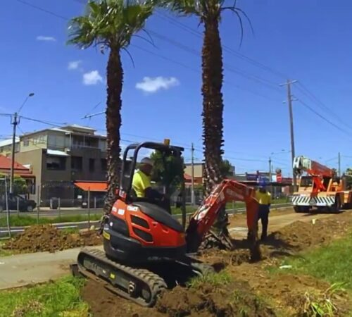 Palm Tree Removal-Sun City FL Tree Trimming and Stump Grinding Services-We Offer Tree Trimming Services, Tree Removal, Tree Pruning, Tree Cutting, Residential and Commercial Tree Trimming Services, Storm Damage, Emergency Tree Removal, Land Clearing, Tree Companies, Tree Care Service, Stump Grinding, and we're the Best Tree Trimming Company Near You Guaranteed!