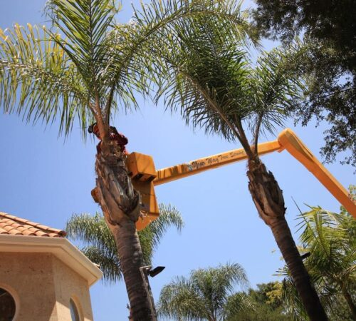 Palm Tree Trimming-Sun City FL Tree Trimming and Stump Grinding Services-We Offer Tree Trimming Services, Tree Removal, Tree Pruning, Tree Cutting, Residential and Commercial Tree Trimming Services, Storm Damage, Emergency Tree Removal, Land Clearing, Tree Companies, Tree Care Service, Stump Grinding, and we're the Best Tree Trimming Company Near You Guaranteed!