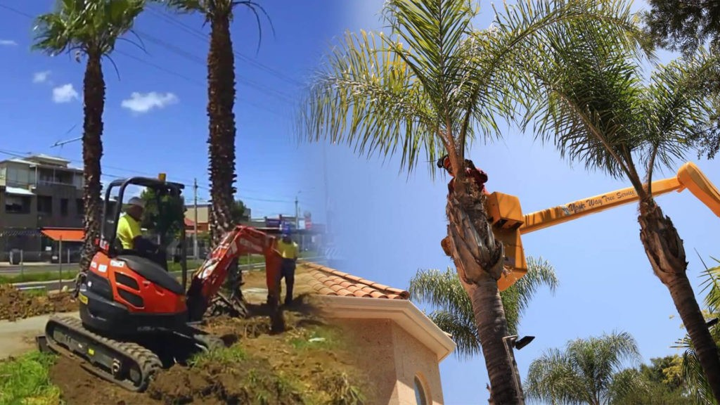 Palm tree trimming & palm tree removal-Sun City FL Tree Trimming and Stump Grinding Services-We Offer Tree Trimming Services, Tree Removal, Tree Pruning, Tree Cutting, Residential and Commercial Tree Trimming Services, Storm Damage, Emergency Tree Removal, Land Clearing, Tree Companies, Tree Care Service, Stump Grinding, and we're the Best Tree Trimming Company Near You Guaranteed!