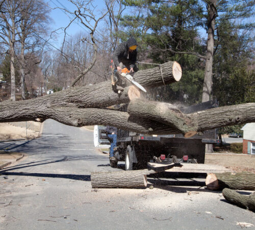 Residential Tree Services-Sun City FL Tree Trimming and Stump Grinding Services-We Offer Tree Trimming Services, Tree Removal, Tree Pruning, Tree Cutting, Residential and Commercial Tree Trimming Services, Storm Damage, Emergency Tree Removal, Land Clearing, Tree Companies, Tree Care Service, Stump Grinding, and we're the Best Tree Trimming Company Near You Guaranteed!