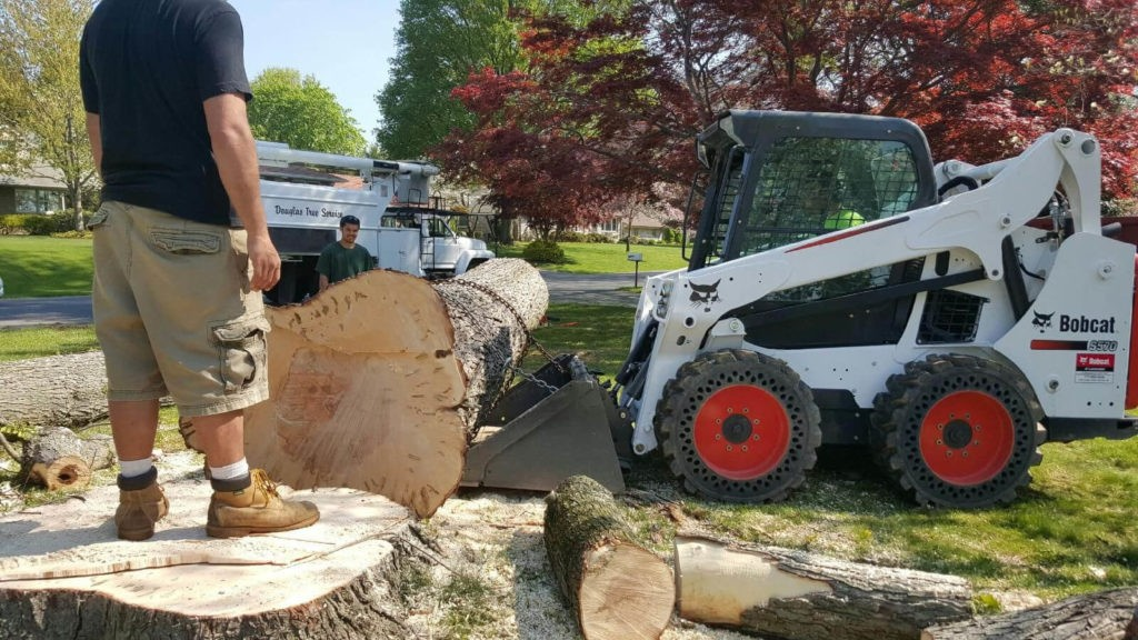 Services-Sun City FL Tree Trimming and Stump Grinding Services-We Offer Tree Trimming Services, Tree Removal, Tree Pruning, Tree Cutting, Residential and Commercial Tree Trimming Services, Storm Damage, Emergency Tree Removal, Land Clearing, Tree Companies, Tree Care Service, Stump Grinding, and we're the Best Tree Trimming Company Near You Guaranteed!