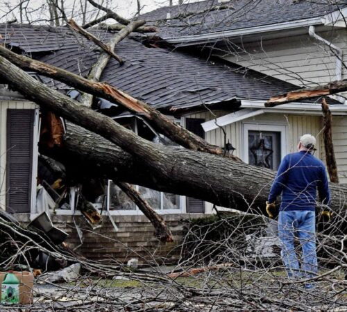 Storm Damage-Sun City FL Tree Trimming and Stump Grinding Services-We Offer Tree Trimming Services, Tree Removal, Tree Pruning, Tree Cutting, Residential and Commercial Tree Trimming Services, Storm Damage, Emergency Tree Removal, Land Clearing, Tree Companies, Tree Care Service, Stump Grinding, and we're the Best Tree Trimming Company Near You Guaranteed!