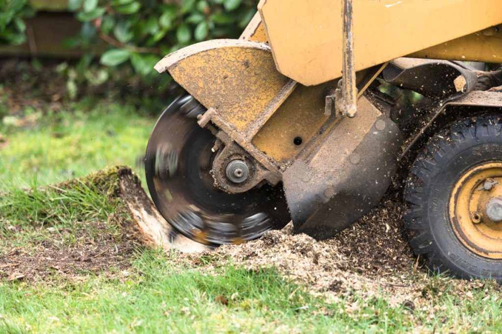 Stump Grinding-Sun City FL Tree Trimming and Stump Grinding Services-We Offer Tree Trimming Services, Tree Removal, Tree Pruning, Tree Cutting, Residential and Commercial Tree Trimming Services, Storm Damage, Emergency Tree Removal, Land Clearing, Tree Companies, Tree Care Service, Stump Grinding, and we're the Best Tree Trimming Company Near You Guaranteed!
