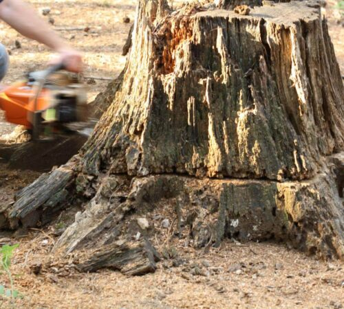 Stump Removal-Sun City FL Tree Trimming and Stump Grinding Services-We Offer Tree Trimming Services, Tree Removal, Tree Pruning, Tree Cutting, Residential and Commercial Tree Trimming Services, Storm Damage, Emergency Tree Removal, Land Clearing, Tree Companies, Tree Care Service, Stump Grinding, and we're the Best Tree Trimming Company Near You Guaranteed!