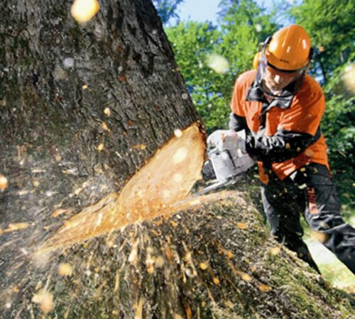 Tree Cutting-Sun City FL Tree Trimming and Stump Grinding Services-We Offer Tree Trimming Services, Tree Removal, Tree Pruning, Tree Cutting, Residential and Commercial Tree Trimming Services, Storm Damage, Emergency Tree Removal, Land Clearing, Tree Companies, Tree Care Service, Stump Grinding, and we're the Best Tree Trimming Company Near You Guaranteed!