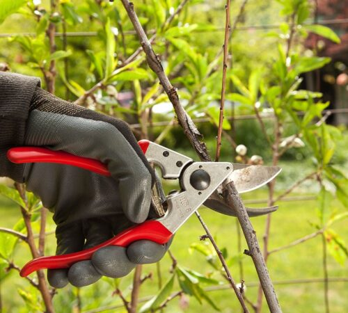 Tree Pruning-Sun City FL Tree Trimming and Stump Grinding Services-We Offer Tree Trimming Services, Tree Removal, Tree Pruning, Tree Cutting, Residential and Commercial Tree Trimming Services, Storm Damage, Emergency Tree Removal, Land Clearing, Tree Companies, Tree Care Service, Stump Grinding, and we're the Best Tree Trimming Company Near You Guaranteed!