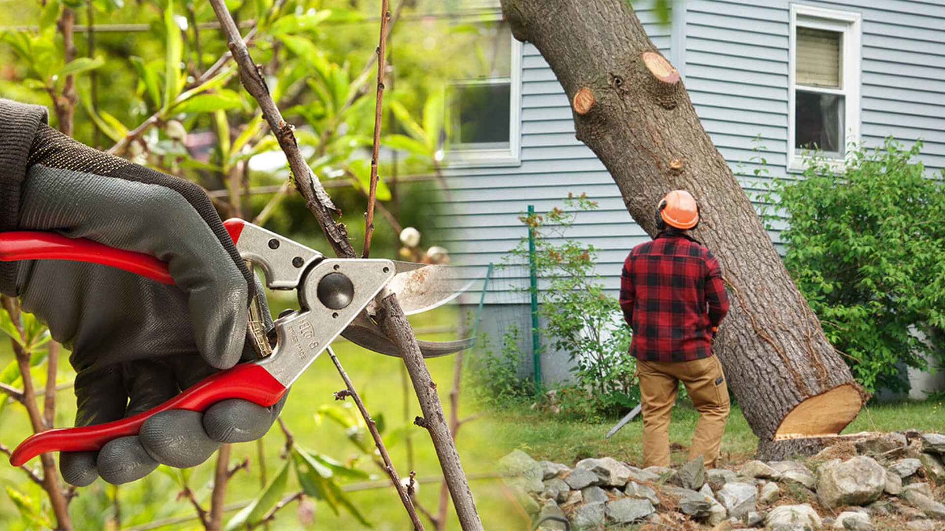 Tree pruning & tree removal-Sun City FL Tree Trimming and Stump Grinding Services-We Offer Tree Trimming Services, Tree Removal, Tree Pruning, Tree Cutting, Residential and Commercial Tree Trimming Services, Storm Damage, Emergency Tree Removal, Land Clearing, Tree Companies, Tree Care Service, Stump Grinding, and we're the Best Tree Trimming Company Near You Guaranteed!